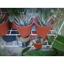 Cactus Parras Plantas De Interior Cantidades