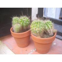 Cactus En Rosario