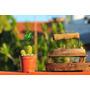 Cactus,crasas Y Suculentas Mini Envase N8 Y 9 Muy Decorativo