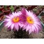 Set X 10 Cactus Y Crasas Suculentas Plantas De Colección