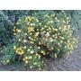 Todo El Año Flores Para Cercos (eurus)