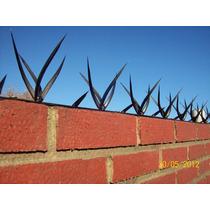Seguridad Perimetral Pinches Puas Puntas Medianeras Muros