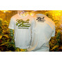 Cannabis Tshirts Remeras Dinafem Marihuana Sensi Green House