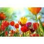 Lamina - Flores En Primavera - 70 X 50 Cm. Laminas Modernas