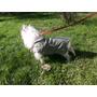 Ropa Para Mascotas Impermeable C/abrigo Polar Talle 2/35 Cm