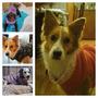 Lote De 6 Camperas Reversibles Para Perritos, Hermosas!!!