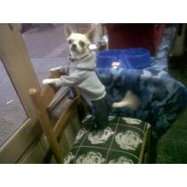 Enterito Buzo Frizado Y Jean Para Mascotas ! Talles 0 Al 3
