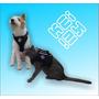 Salvavidas Perros Y Gatos Neoprene Xxs Xs Keikeineoprene