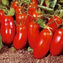 Semillas Combo Tomates Internacionales