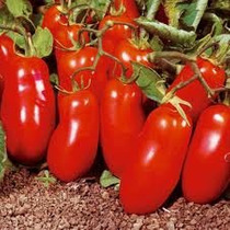25 Semillas De Tomate San Marzano