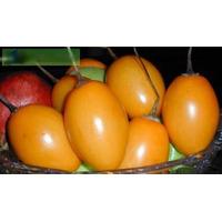 Tomate De Árbol, Cyphomandra Betacea Semillas Para Plantas