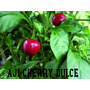 Semillas Raras - Tomate Cherry, Morrón, Pimiento
