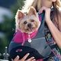 Mochila Transportadora Para Llevar Gato Perro Chico