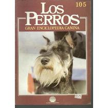 Enciclopedia Canina Perro Terrier Aleman Pelo Corto 105