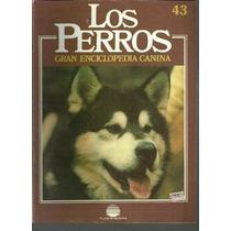 Enciclopedia Canina Perro Fila De Brasil Nordico Esquimal 43