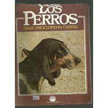 Enciclopedia Canina Perro Artesien Normando Artesiano Nor 83