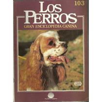 Enciclopedia Canina Perro American Cocker Spaniel Terrie 103