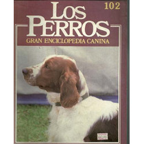 Enciclopedia Canina Perro Springer Gales Agua Americano 102