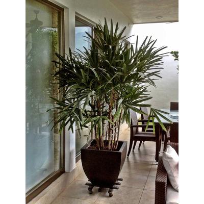 Macetas Interior Plantas En Macetas Download Conjunto De Plantas