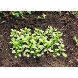 10 Hojas A5 Papel Plantable