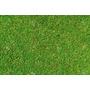 Cesped Lawn Grass Sol Cesped Ingles 500g Rinde 30m2 Aquaflex