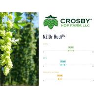 Lúpulo NZ Dr. Rudi - CROSBY -